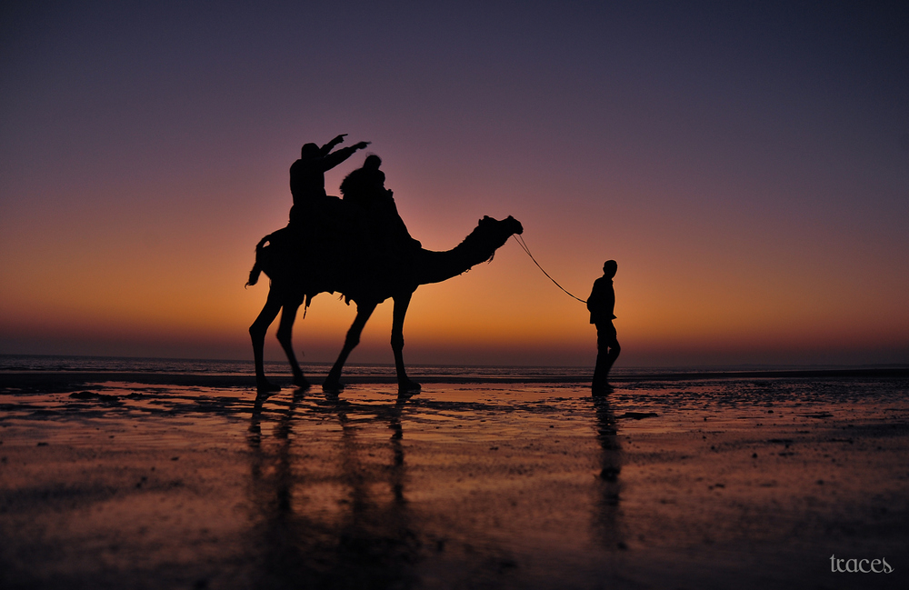 The last camel ride of fading day!