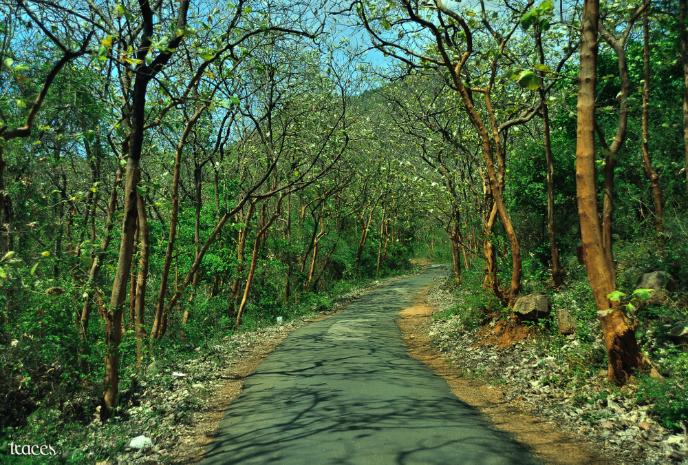 Curving towards the forests of Manimuthar