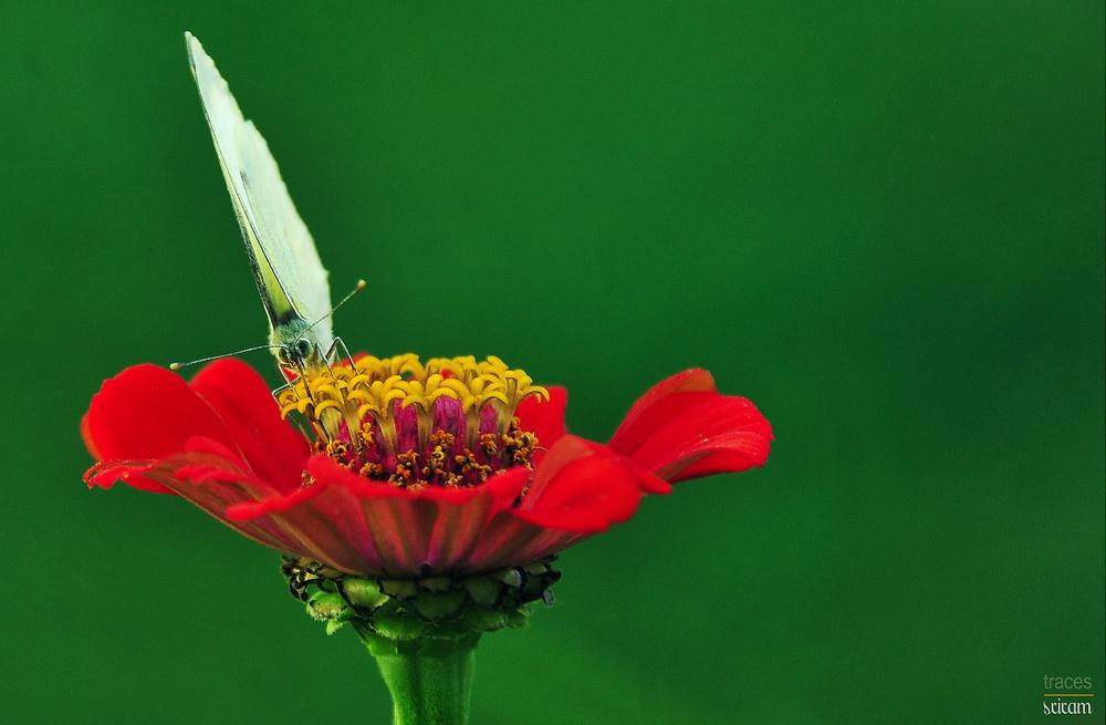 Antennas and nectar