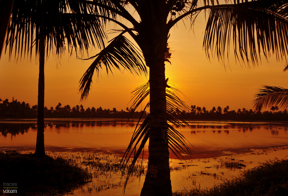 The Kuttanad Sunrise
