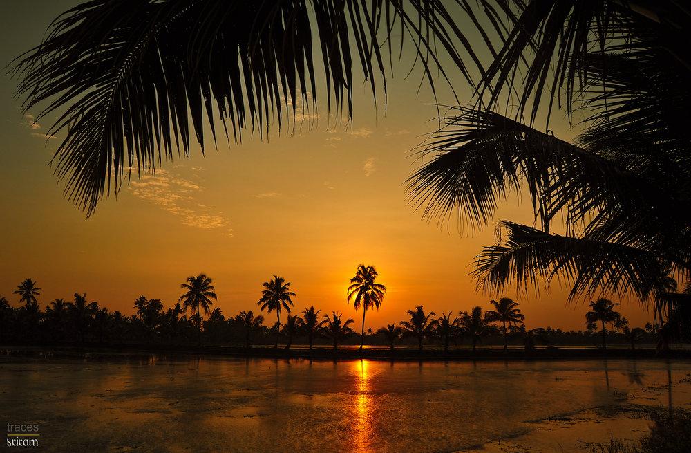 Golden hues of the Kerala rice bowl