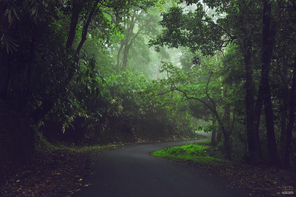 Curves, rains and the mist