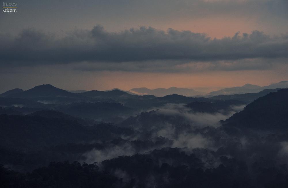 Mist around the rainforests