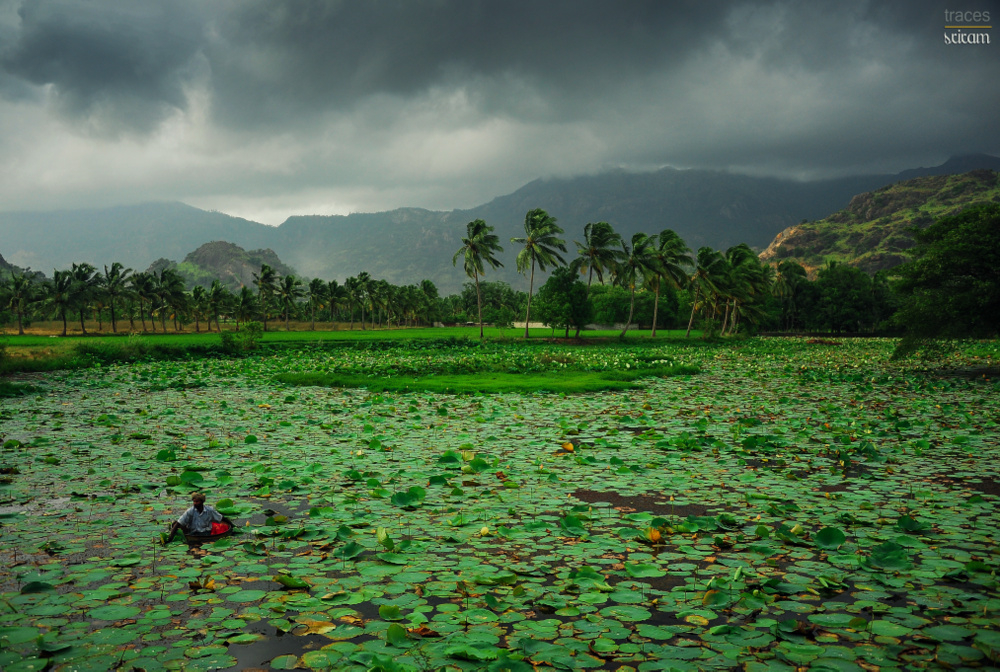 Cloudy noon at the lotus pond