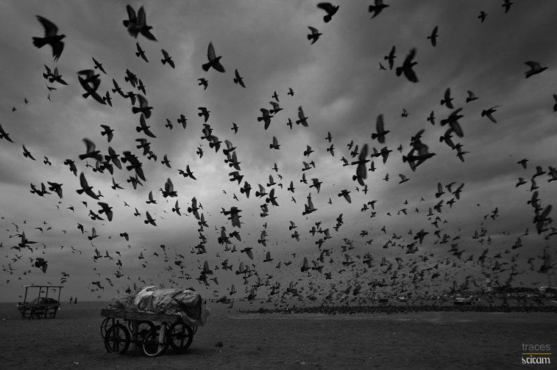 Aminus3 Featured photo The countless pigeons of Marina | 16 September 2014