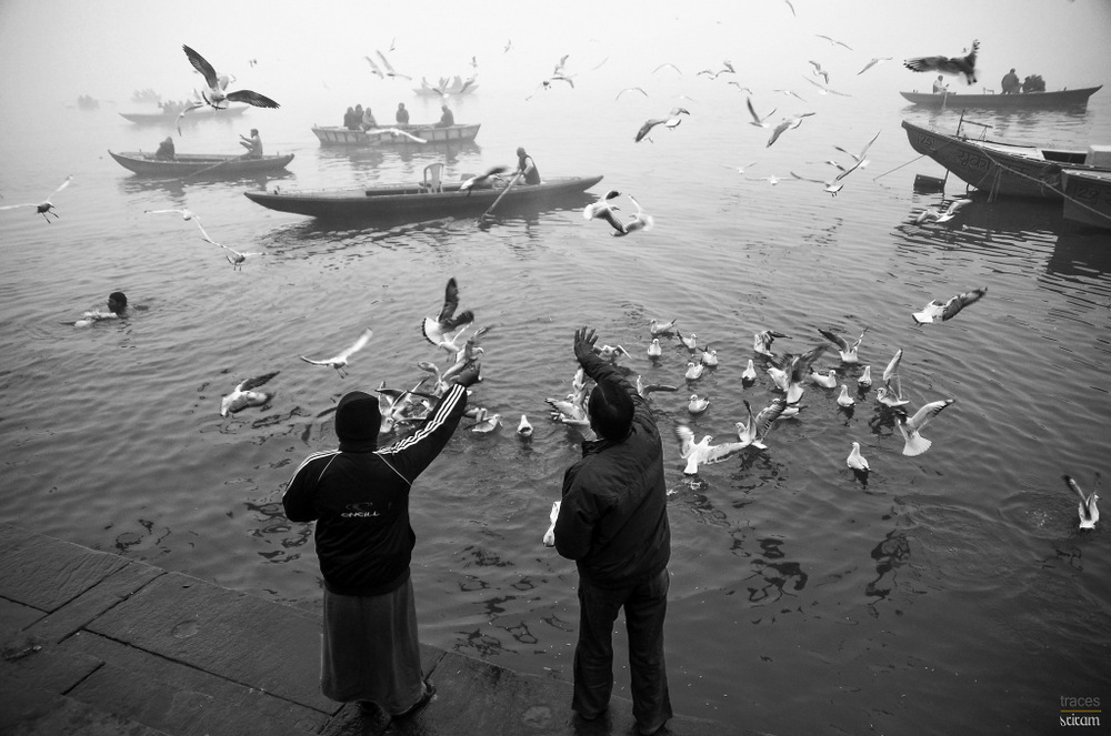Morning with the Gulls and Ganges