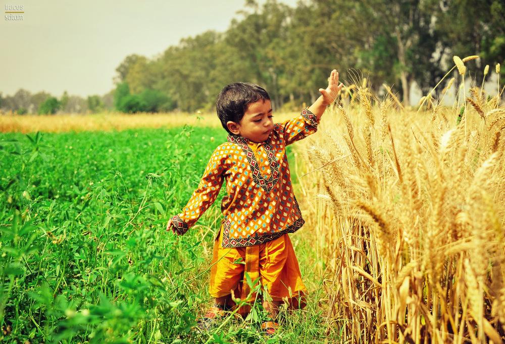 At the maize farms of Paghwara