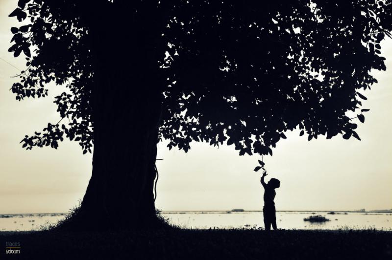 Feeling the tree of life