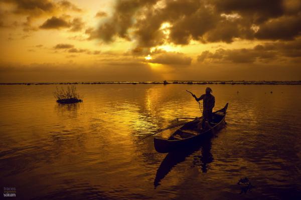 Golden Glittering Backwaters