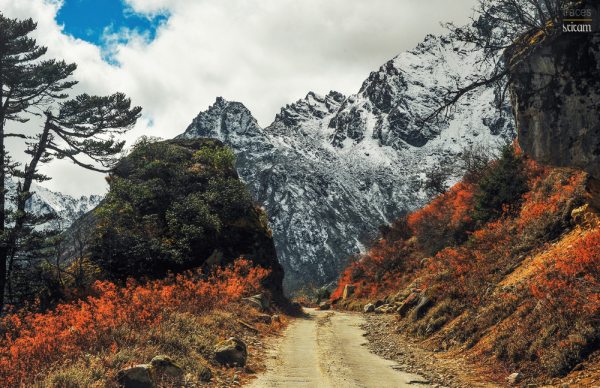 Roadscapes of Yumthang