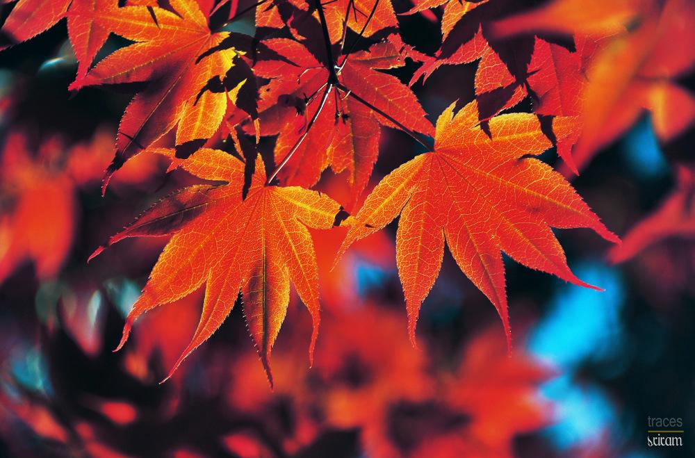 Autumn like Spring