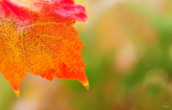 Foliage pallette
