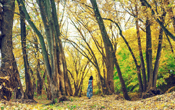 A stroll in yellow woods