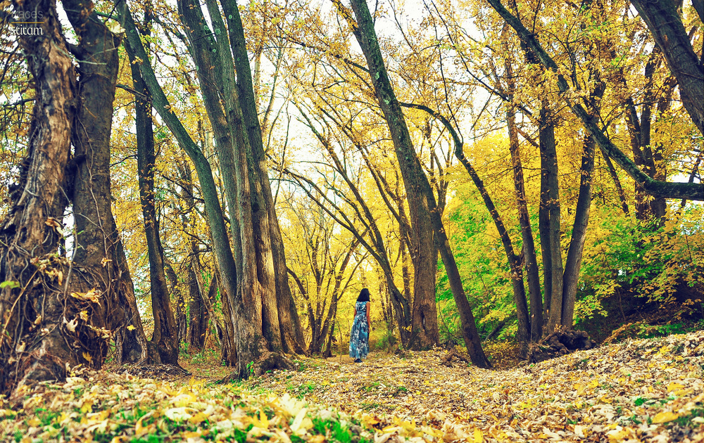 The yellow woods
