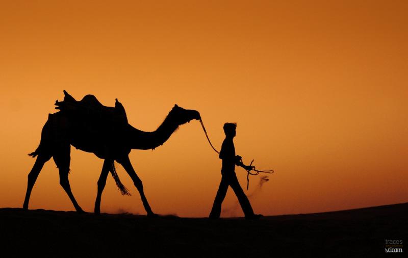Journey through the dunes