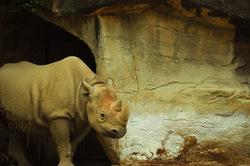 2 horned Rhino