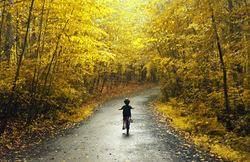 Through the falling yellows