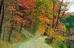 Roadway to autumn