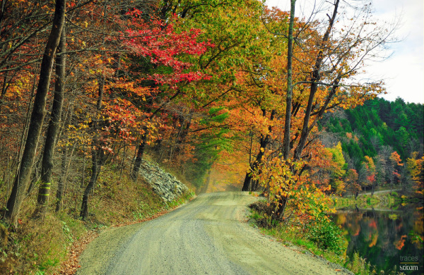 Roadway to autumn