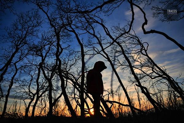 Wandering woods