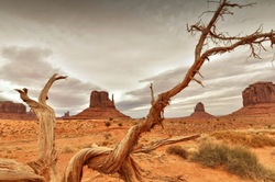 Traces of the Navajo's