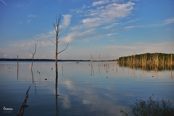Reservoir woods