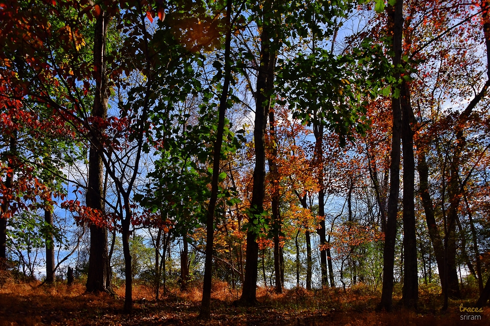 Deep Foliage