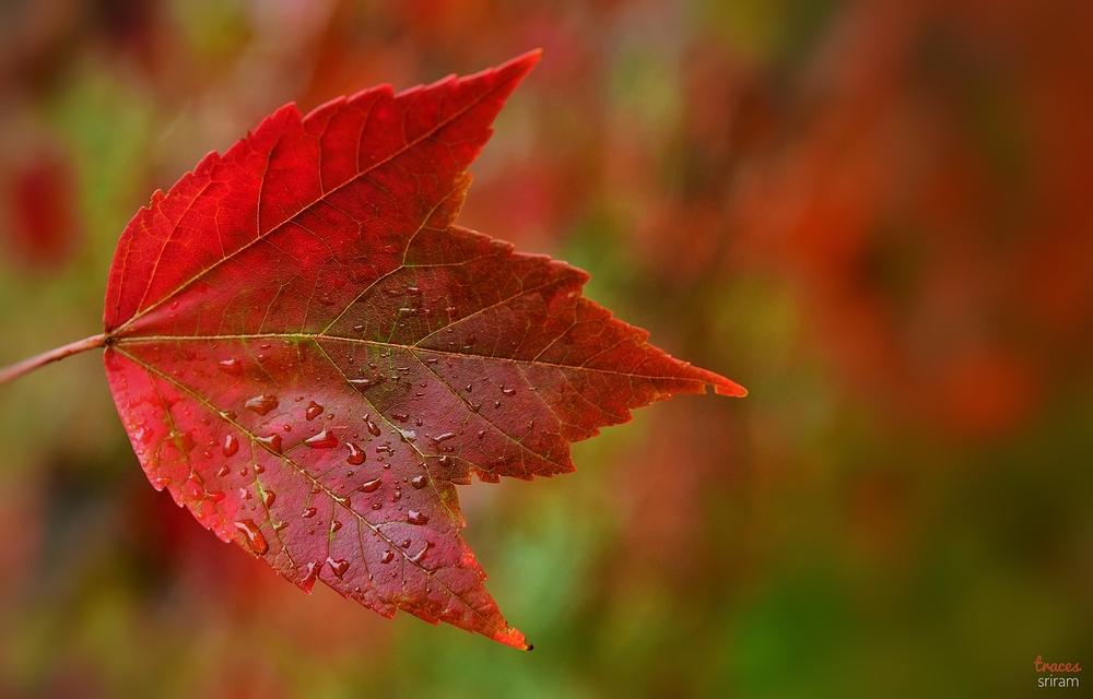 Rains in Autumn