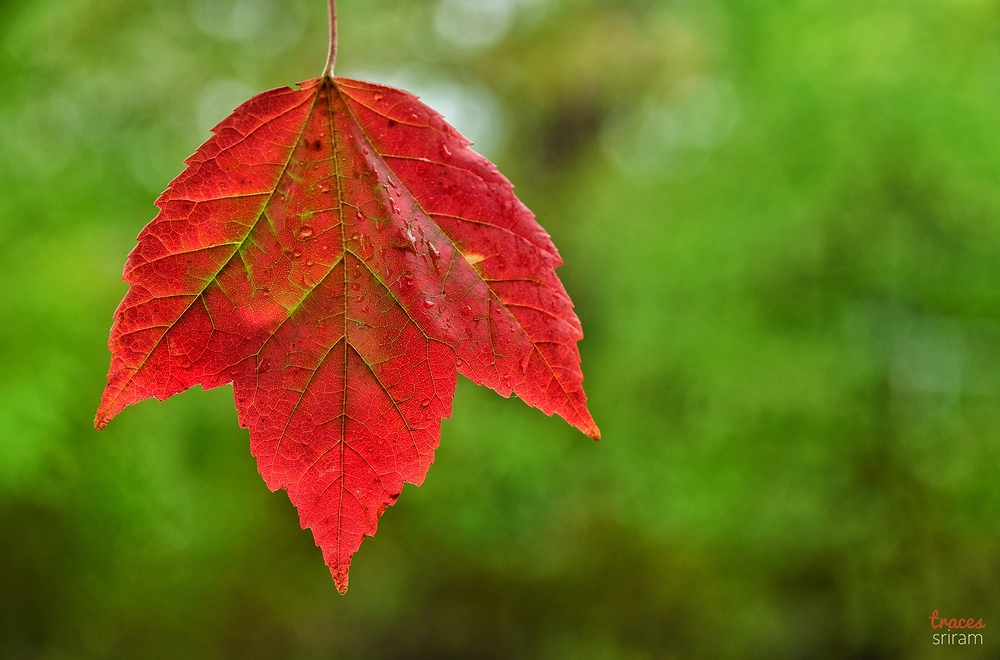 Veins of the fall
