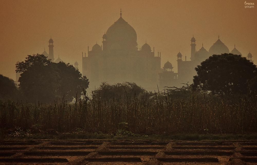 Taj from the fields