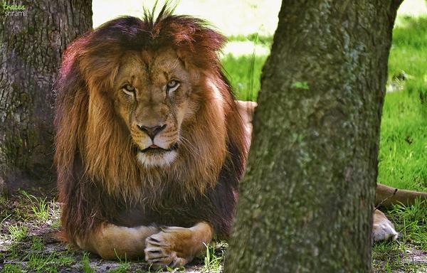 King sized!