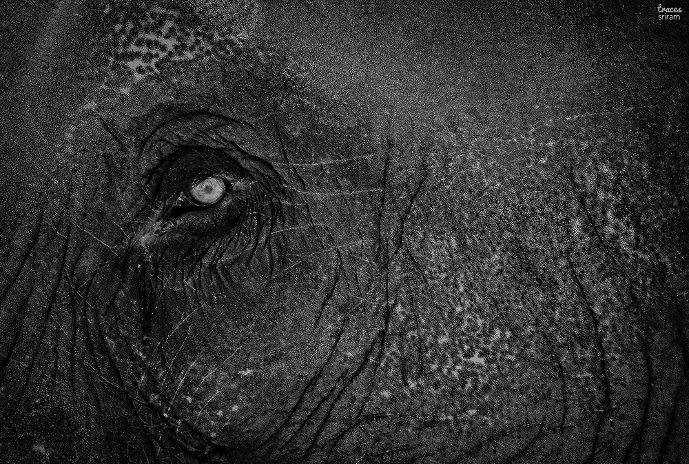 Eyes of the mammoth