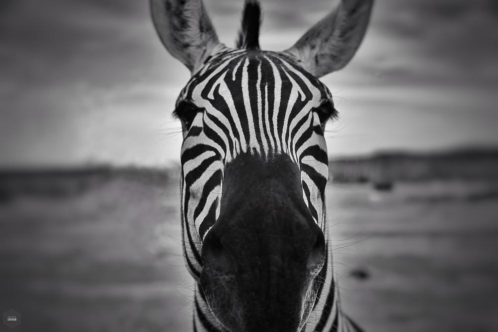 Stranger in stripes