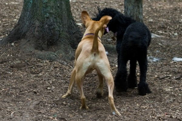 Dog Butts at the Dog Park I