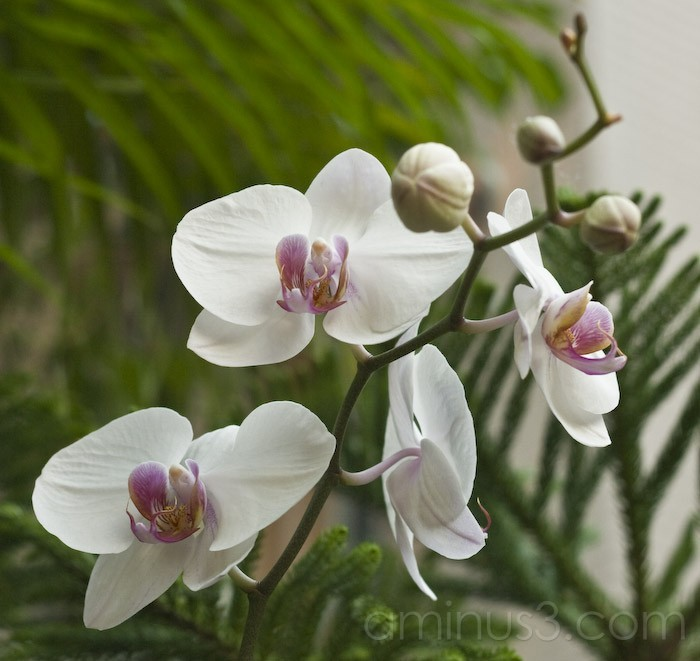 Orchids in The Delta