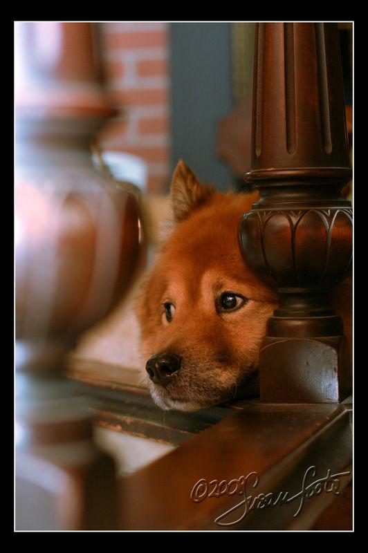Pitiful Pup