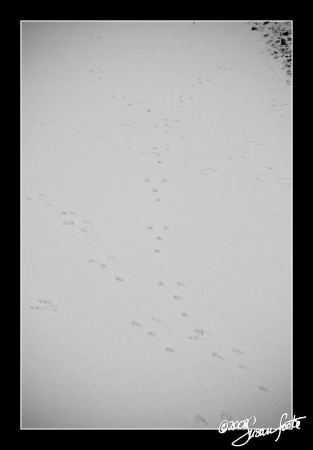 Follow those tracks ...
