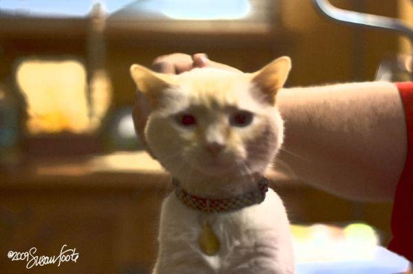 Kitty-kitty