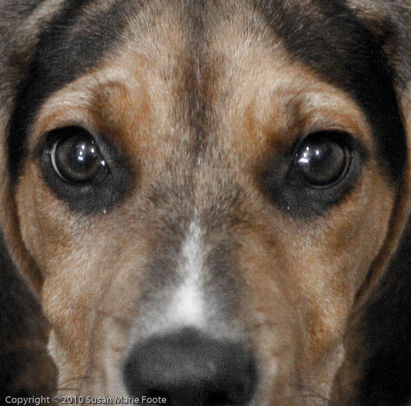 Zoe's Eyes