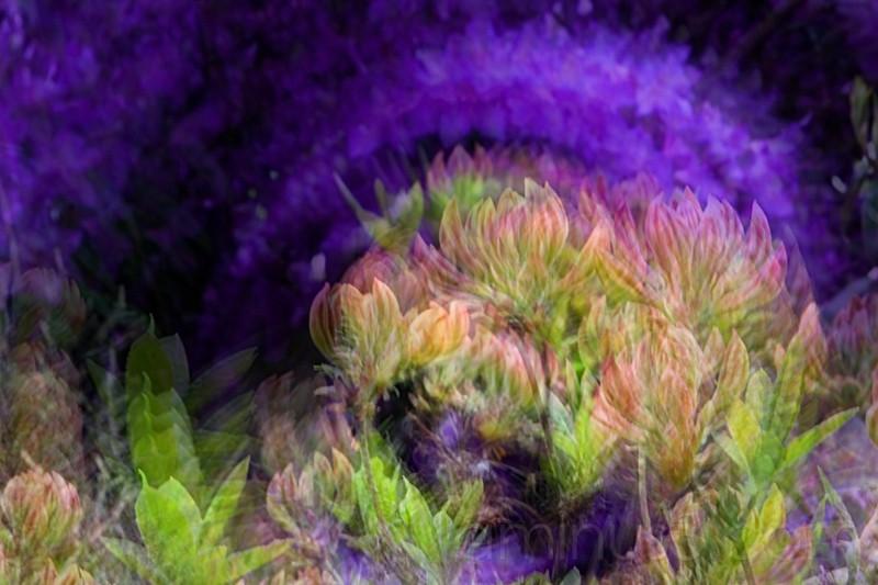 swirling azalas, multiple exposure