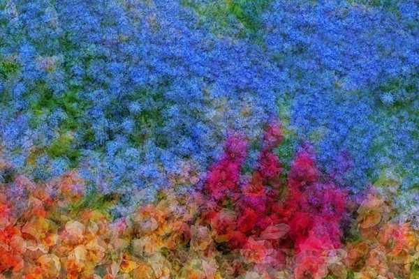 multiple exposure shot of a variety of flowers