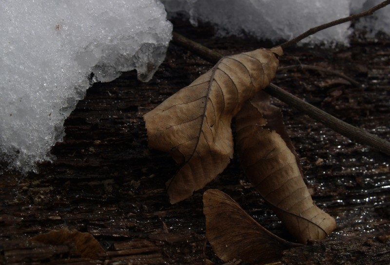 change of season leaves and snow