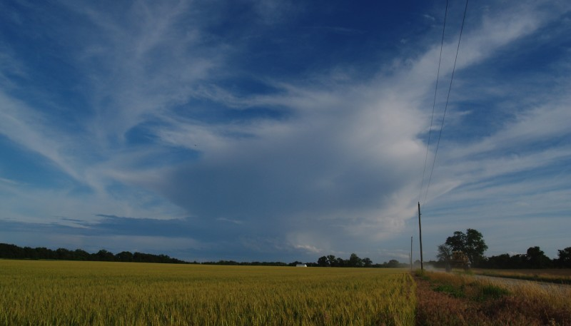 winter wheat northeast missouri