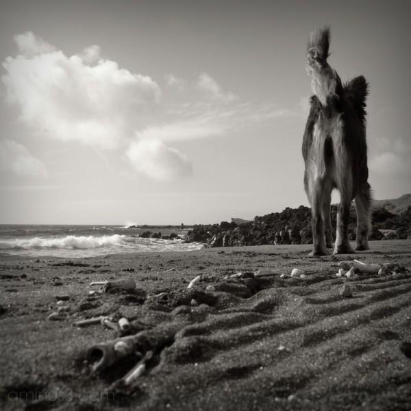 populo beach, S. Miguel, Azores