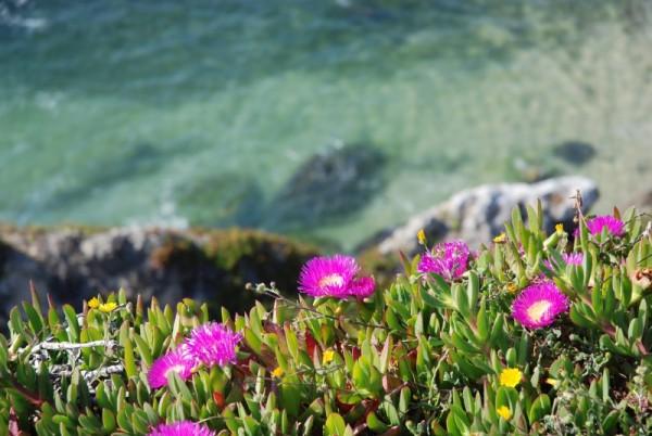 Flores à beira mar