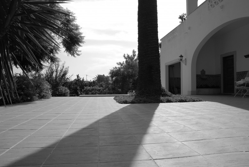 Shadow and tall tree