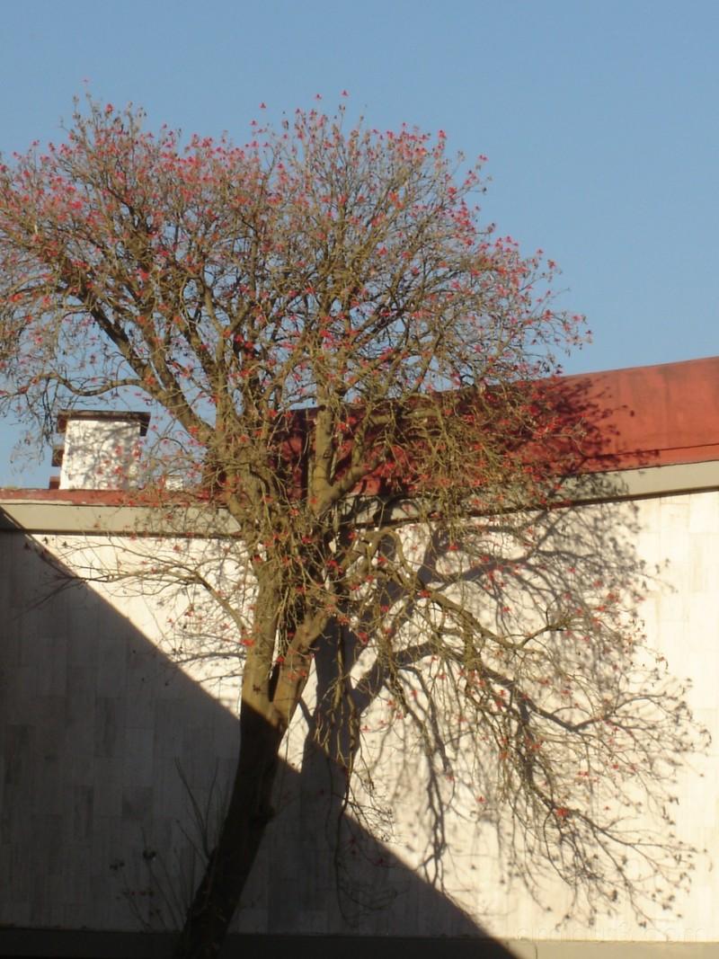 árbol y arquietctura