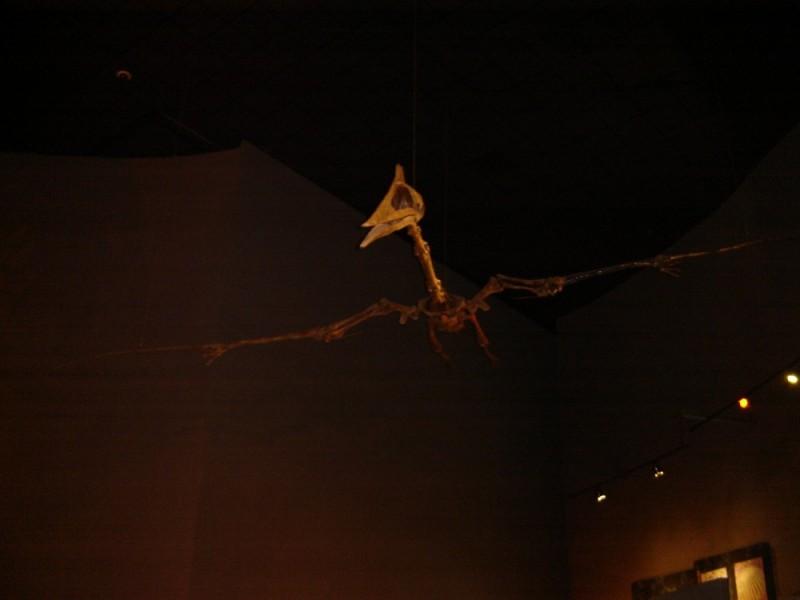 fosil volador