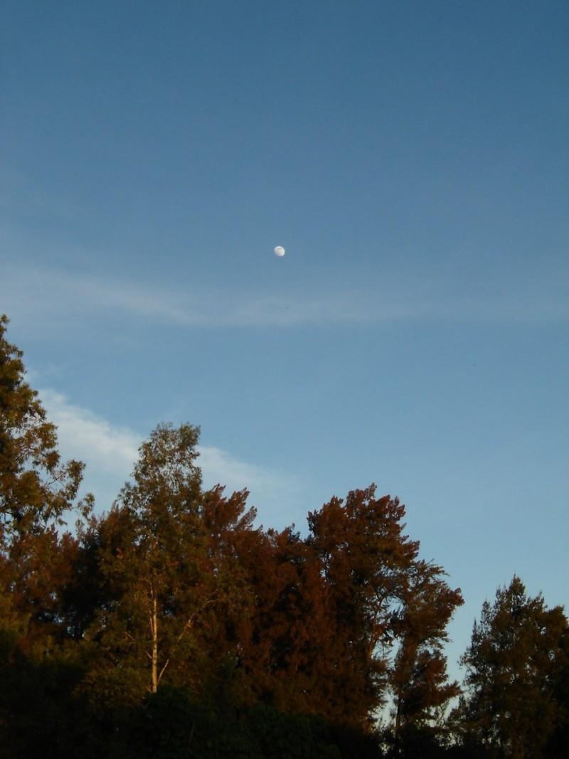 bosque y luna