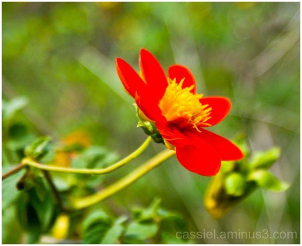 contraste en flor